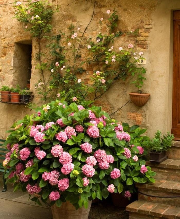 Цветок покорившие сердца5