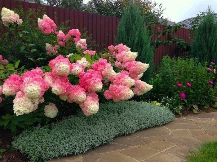 Цветок покорившие сердца7