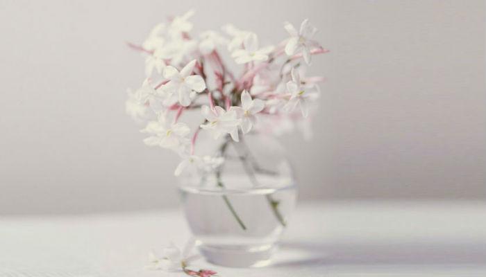 Цветы и растения, которые помогут вам хорошо спать
