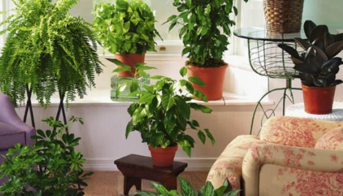 Цветы в доме для защиты и очищения