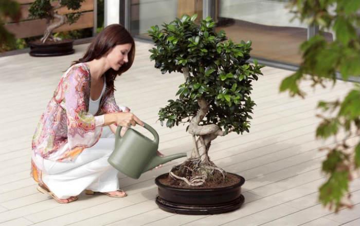 Искусство выращивания бонсай