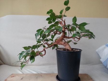 Комнатные растения и цветы по фэн-шуй