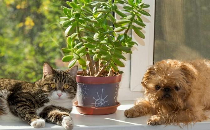 Комнатные растения и домашние животные