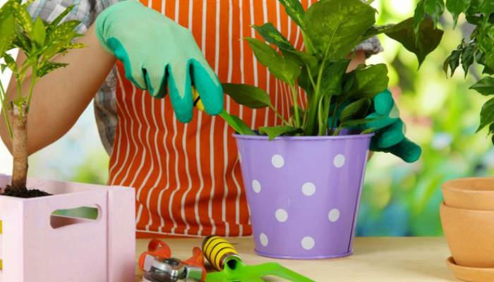 пересадка комнатных растений в 2018 по лунному календарю на