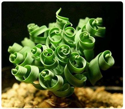 Странные и прекрасные домашние растения, о которых вы не знали
