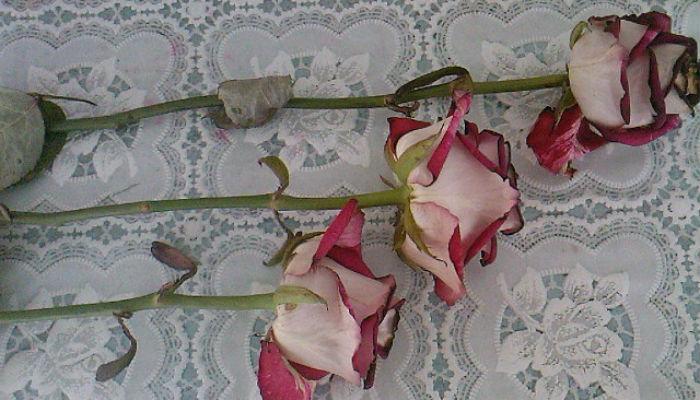 Супер-средство «тройчатка» для проращивания роз!