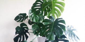 14 ошибок в уходе за комнатными растениями