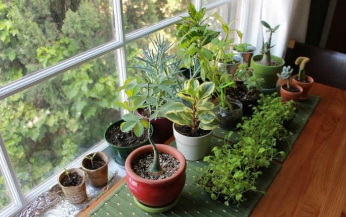 3 простых трюка для здоровья комнатных растений. Они оживут и зацветут!