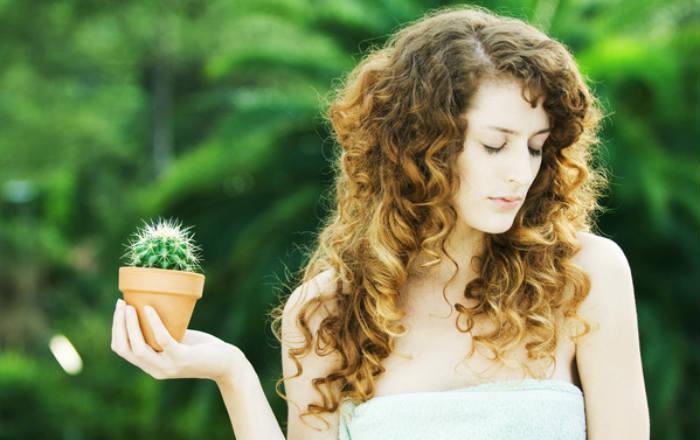 5 мифов о кактусах: почему нельзя ставить у монитора