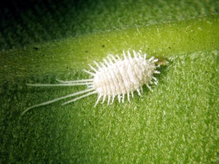 Что нужно знать о вредителях комнатных растений?