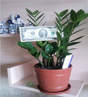 Долларовое