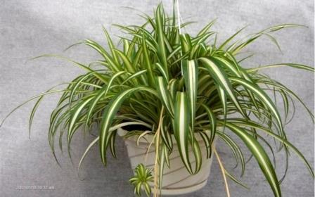 Это должна знать каждая хозяйка! 4 комнатных растения, которые приносят огромную пользу!