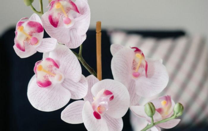 Главные правила ухода за орхидеей