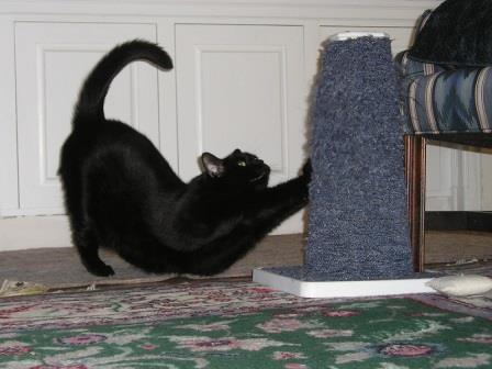 Как отучить кота портить мебель? Совет, который изменил мою жизнь