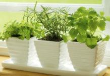 Какие растения выбрать для кухни
