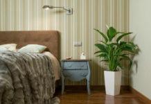 Лучшие комнатные цветы для спальни