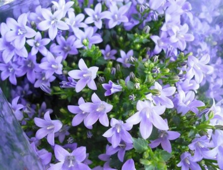 Вьющиеся комнатные растения: великолепная семерка