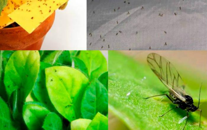 Хороший цветовод знает, для чего втыкать спички в горшки с комнатными растениями!
