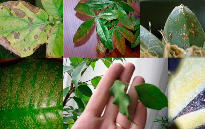 Защити комнатные растения от болезней