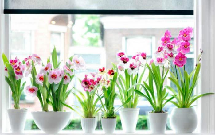 Зная этот секрет, вы с легкостью сможете размножать любимые орхидеи!