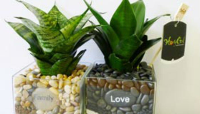 Самые полезные комнатные цветы для дома