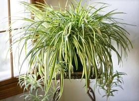 11 комнатных растений, которые должны быть в каждом доме