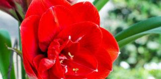 Магические свойства комнатных растений