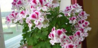 Растения, которые подходят для спальни