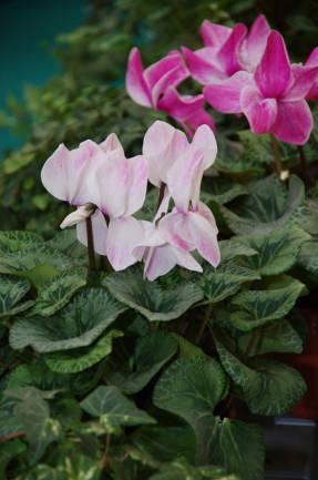 Самодельные удобрения для комнатных растений: польза или вред?
