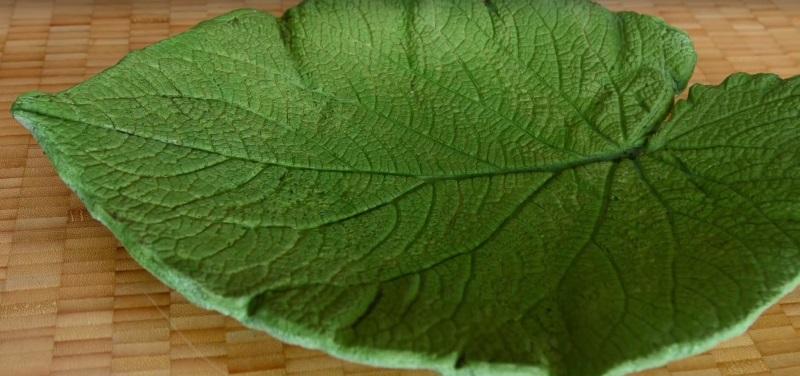 Хватай самый большой лист в саду, какой только сможешь найти.. тебе понравится эта идея!