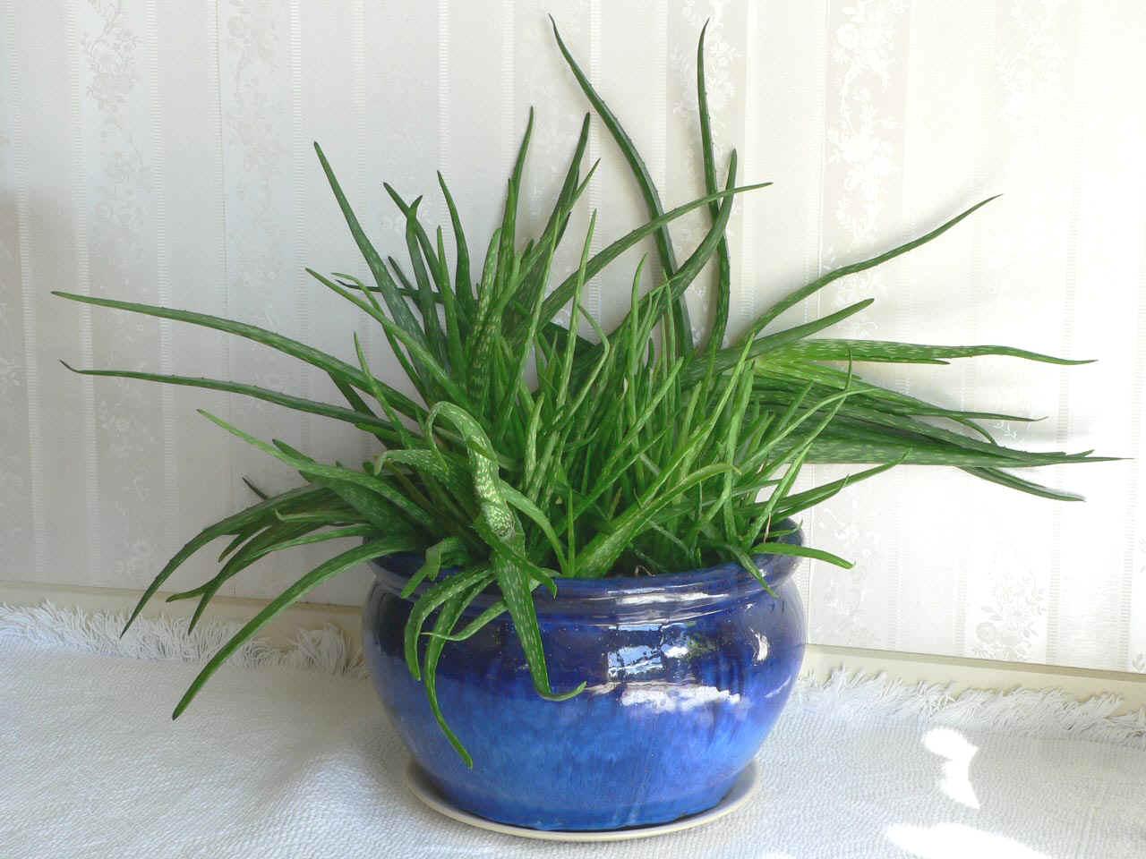 8 необычных комнатных растений, которые вам понравятся!