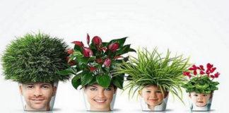 Комнатные цветы для благополучия и счастья в доме