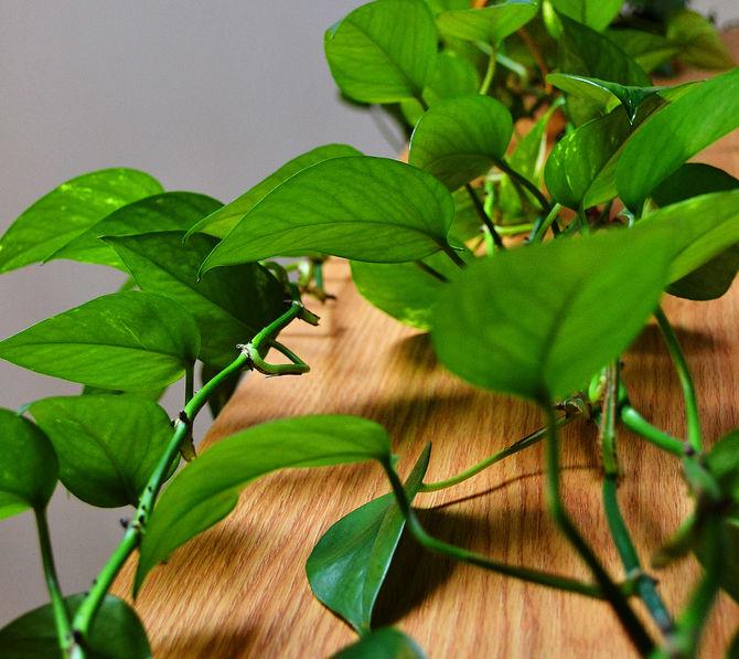 Комнатные растения для слабо освещенных помещений