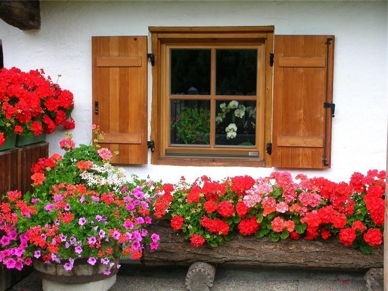 Каникулы для комнатных растений: Выносим домашние цветы на свежий воздух