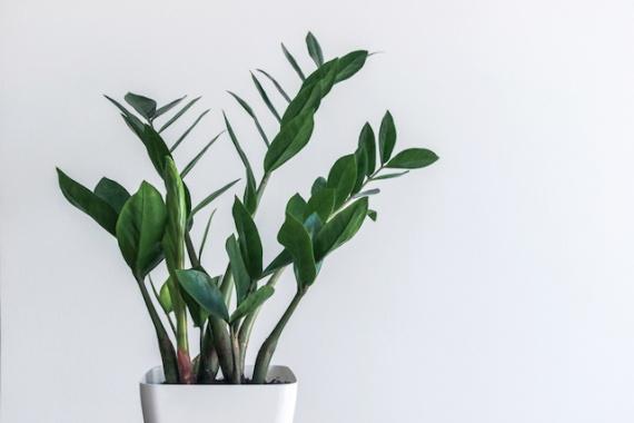 Восемь растений,которые хотят жить в вашей ванной комнате