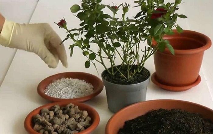 Комнатное растение нуждается в пересадке? Как определить?