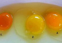 Какое из этих яиц снесла здоровая курица? Я раньше этого не знала!