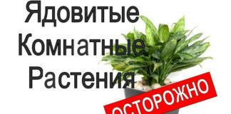 Ядовитые комнатные растения, комнатные растения