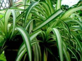 Чем полезны комнатные растения