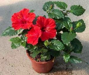 Комнатные растения на удачу, деньги и семейное счастье