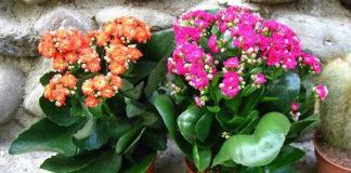 То, чего не хватает вашим цветочкам