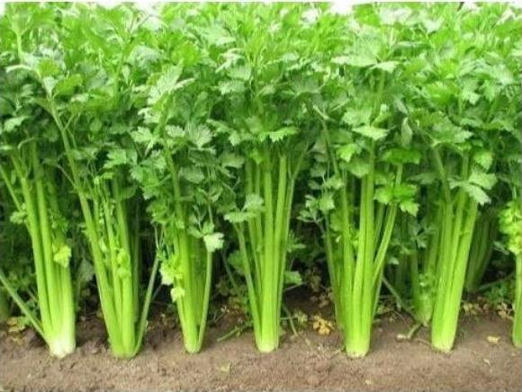 Как растут продукты,которые мы едим