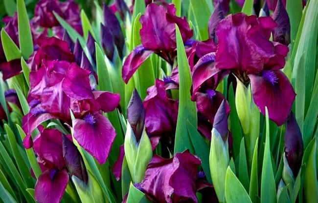 Цветы многолетники для сада — неприхотливые и долгоцветущие