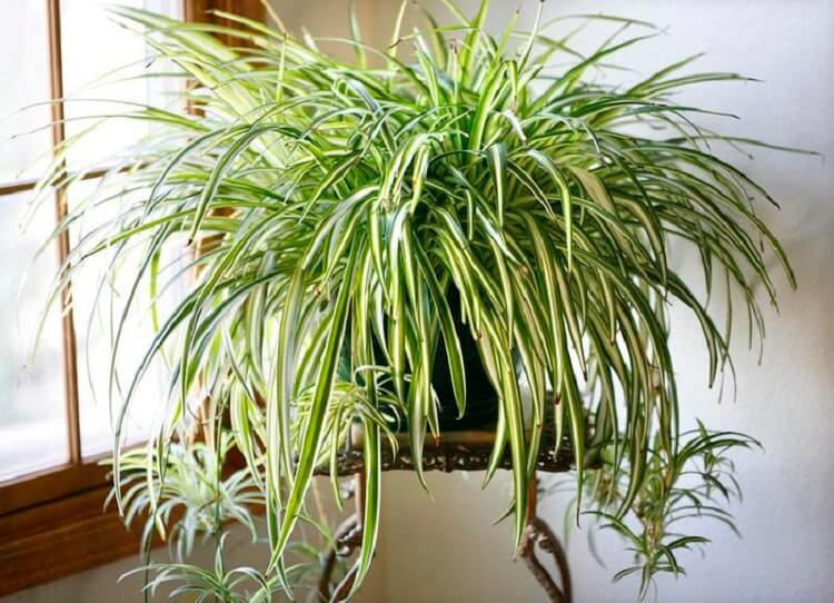Комнатные растения, которые хорошо очищают воздух