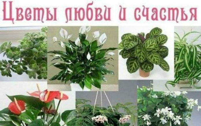 Комнатные растения, которые приносят любовь и большую удачу