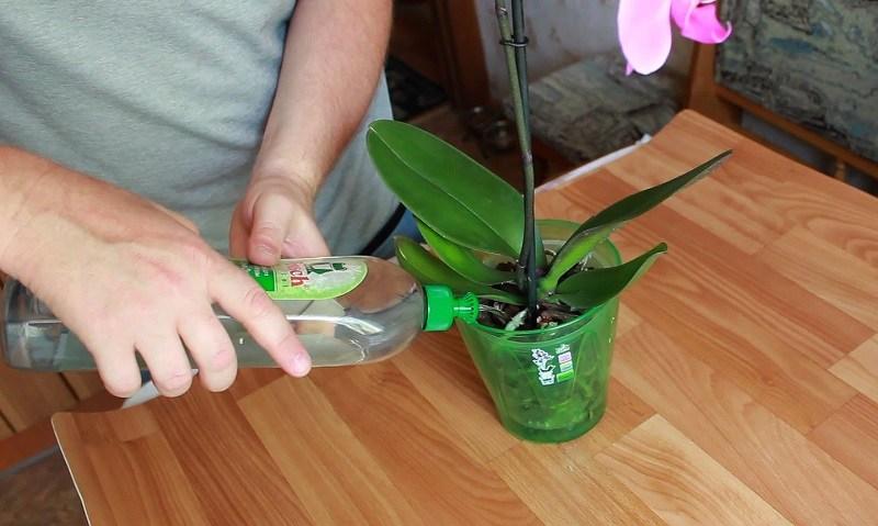 что дает янтарная кислота для орхидей