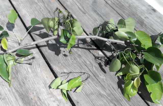Применение йода в саду и огороде, а также для комнатных растений