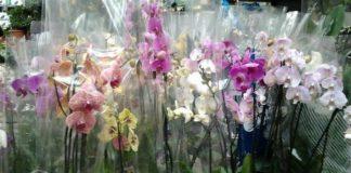 Соблюдай 9 правил и орхидея будет цвести круглый год