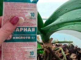 Янтарная кислота преображает орхидею