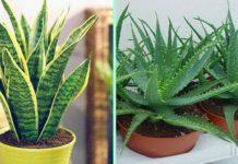 Растения, которые должны быть в каждой квартире